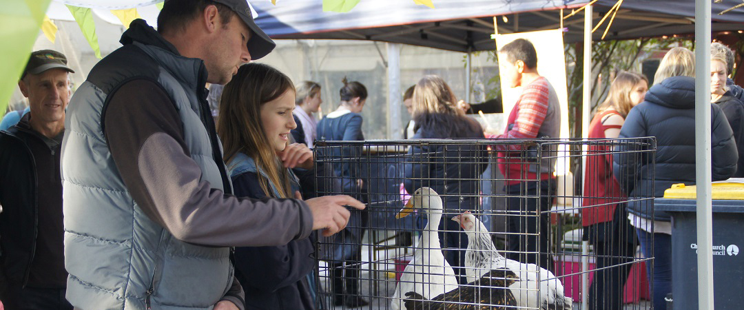 Christchurch: Riccarton Bush Market