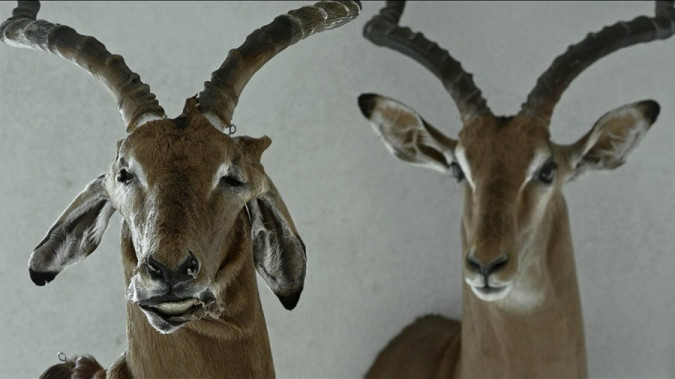 Still from Animus Animalis (A Story about People, Animals and Things)
