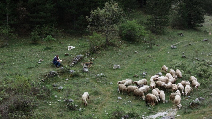 Still from Res Creata – Humans and Other Animals