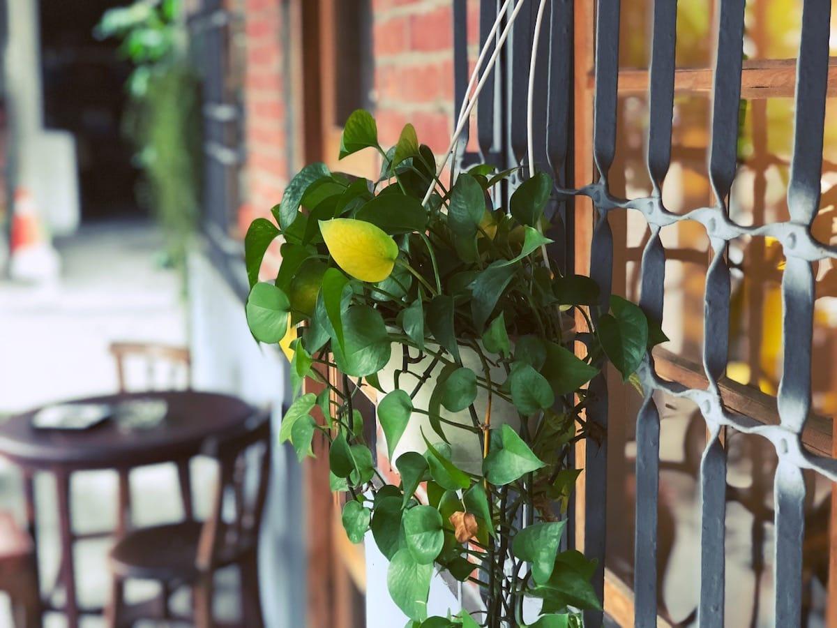 Lili手作烘焙外的鐵窗花