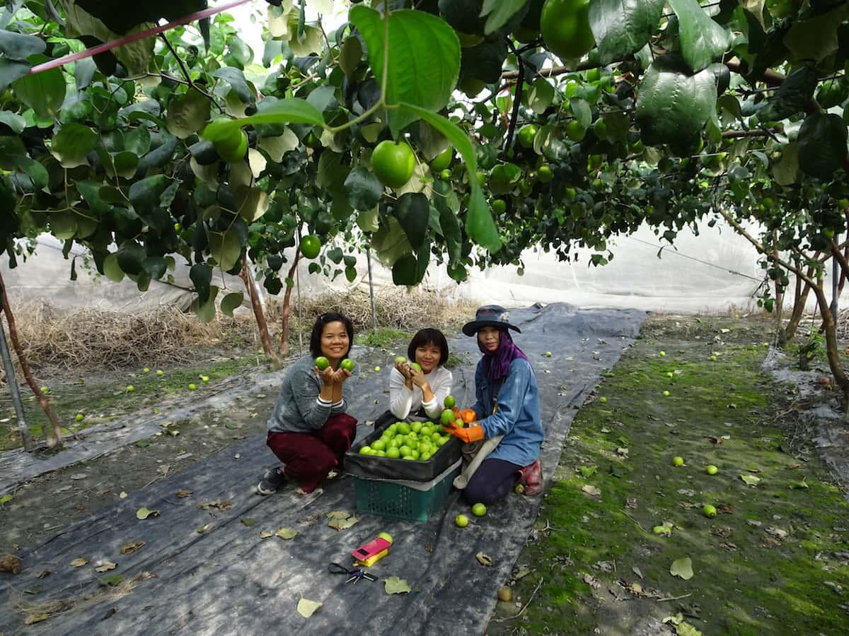 連續四天的行程讓我們更了解農村裡農忙的時段真是辛苦