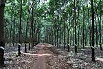 Cambodia exports nearly 30,000 tonnes...