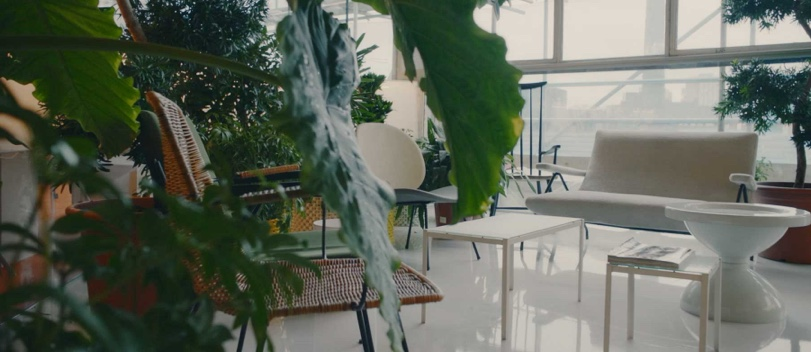 Plants and benches