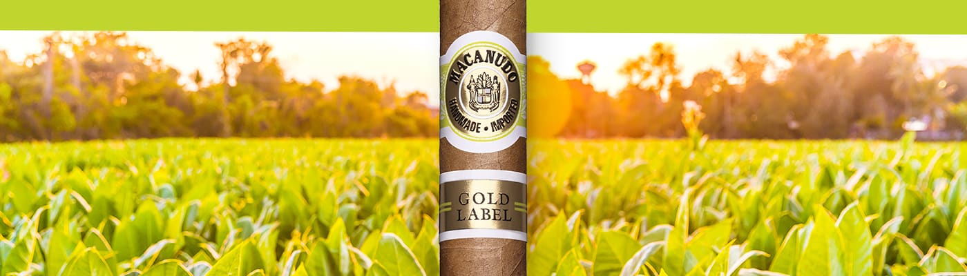 Macanudo Gold Label - Pure Gold Featured Image