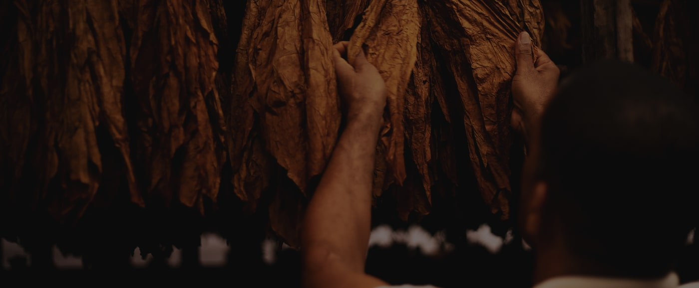 Tobacco Aging