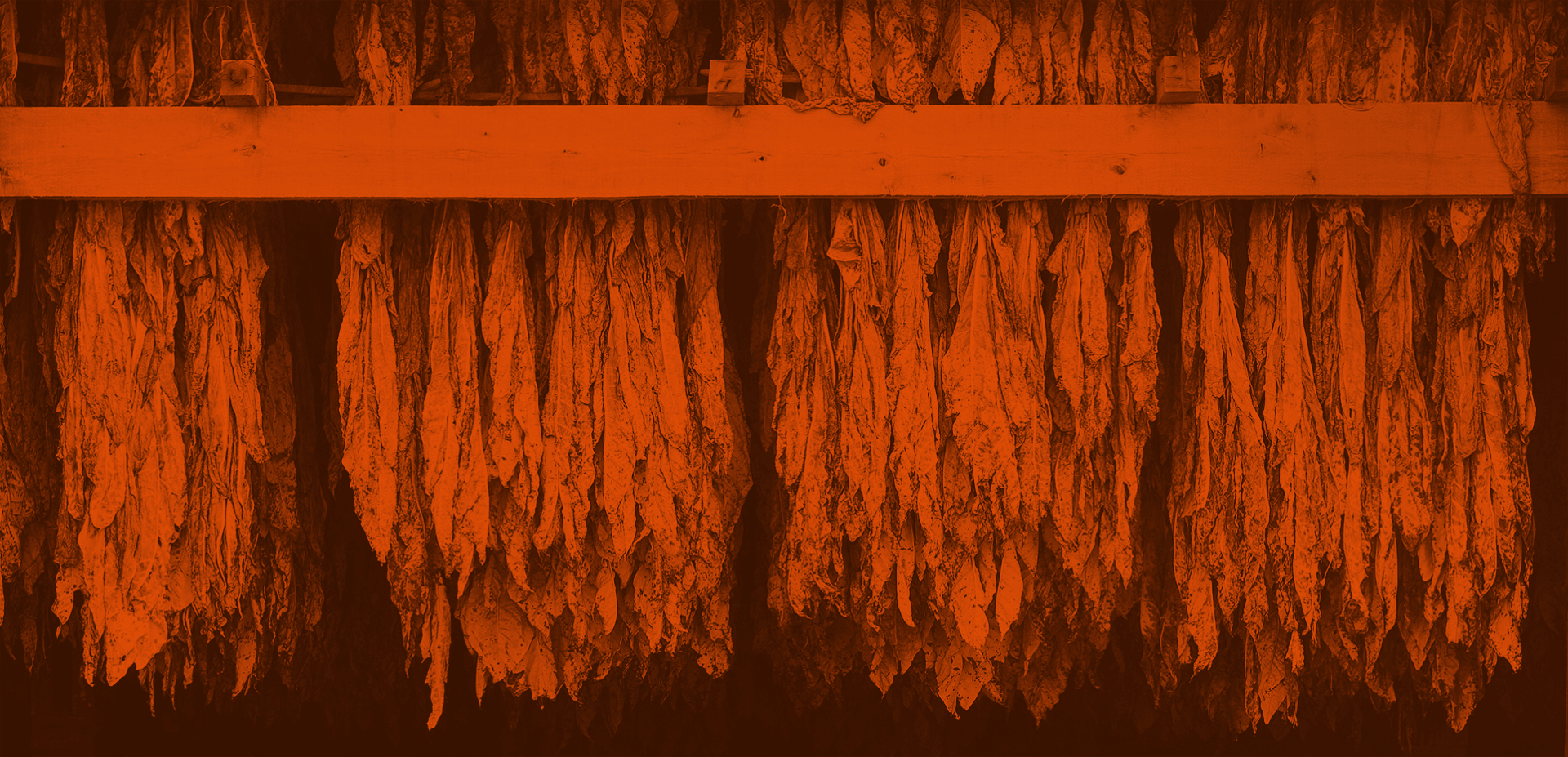 The Whats, Hows & Whys of Tobacco Curing Featured Image