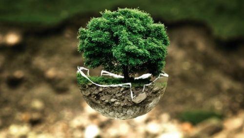 Baum Render für die Umwelt