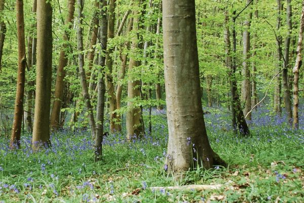 Unmissable things to do in Sherwood Forest