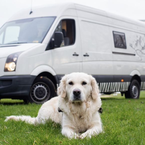 Dog Friendly Accommodation with your Campervan