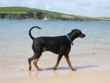 Bringing a Dog - Motorhome Travel