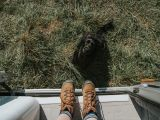 What to Bring for a Campervan Trip With Your Dog