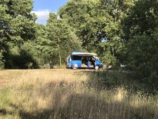 Klaartje | Originele Volkswagen Westfalia hoogdak camper