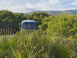GREEN PEAS – Mercedes-Benz Oldtimer Ambulance