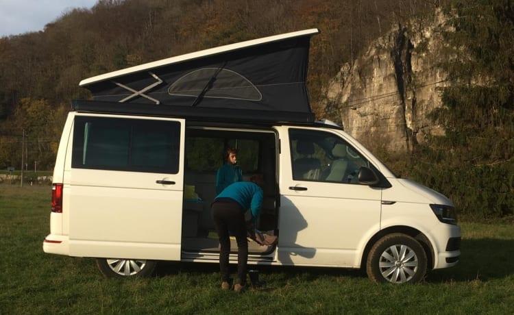 Fitty The Beagle – Volkswagen California Coast