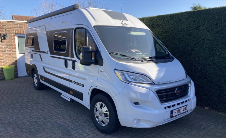 Trees – Bus camper for rent New!