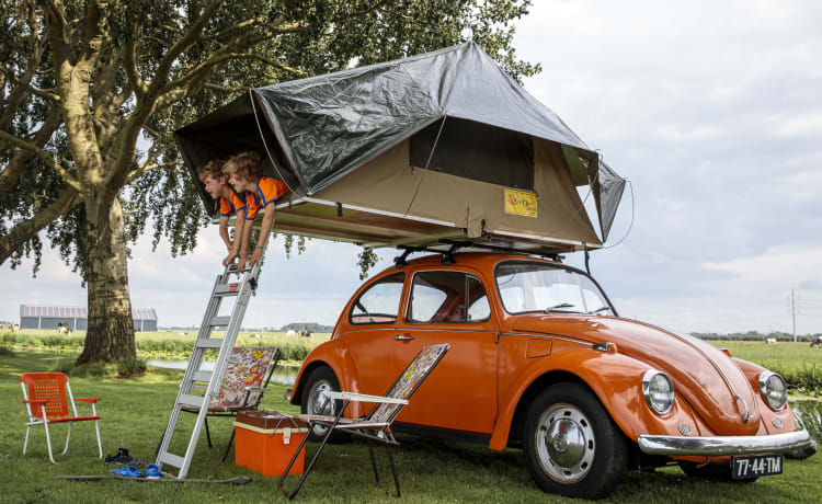 Animal – VW Beetle with roof tent