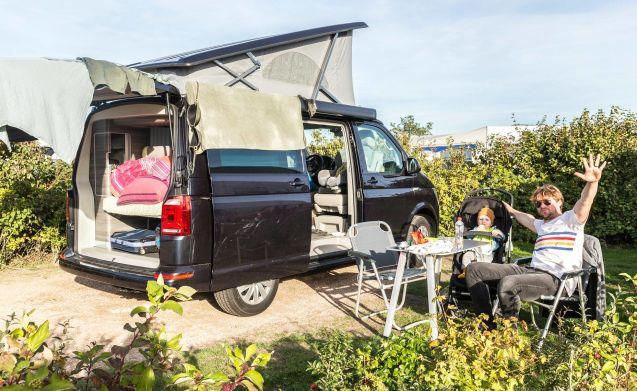 Brand new Volkswagen California for rent