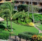 View looking down on the tropical grounds, vivid green