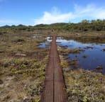 Alakai Swamp trail, highest swamp in the world