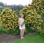 Pincushion Protea in Kula