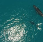 Whale watch in season from the lanai. Whales play, mate and calf just offshore.