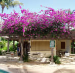 Bougainvillea at the pavillion