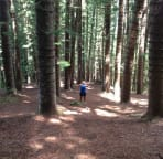 3 trailheads to Sleeping Giant, hike this forest via the south & west trailheads