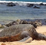 Turtles sightings are frequent!