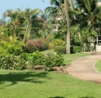 Beautiful landscaped path at Maui Banyan Resort...Vacation ready for you