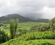 Hanalei Valley, Rice and Taro Fields