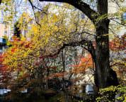 Garden view in autumn