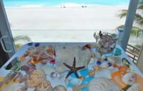 Fresh shells collected from a morning walk on the beach