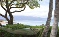 Relax under Coconut tress