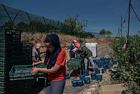 Workers in Spain's Strawberry Fields...