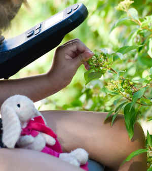 A young girl's handgrabs green berries off a bush near the edge of a parking lot. A stuffed pink bunny sits in her lap.