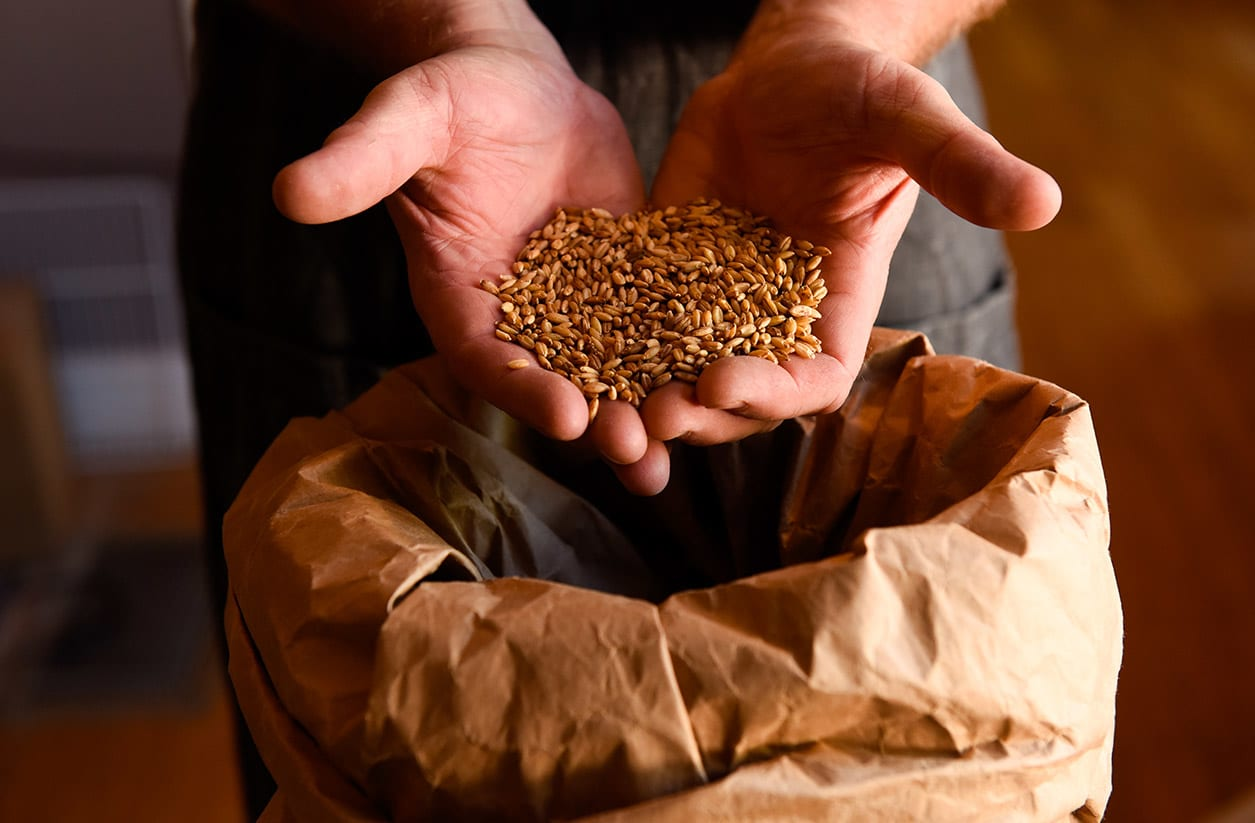 A man holds a pile of grains in his hand over a bag.