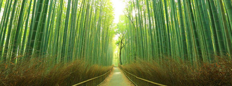 Image result for ninja forest