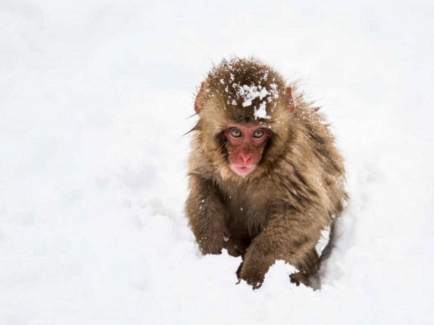 1-Day Tour in Nagano: Snow Monkeys, Zenkoji Temple and Sake - 1