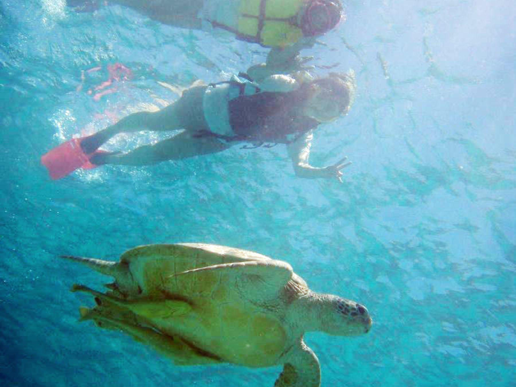Snorkeling With Sea Turtles in Tokashiki Island's Lagoon - 2