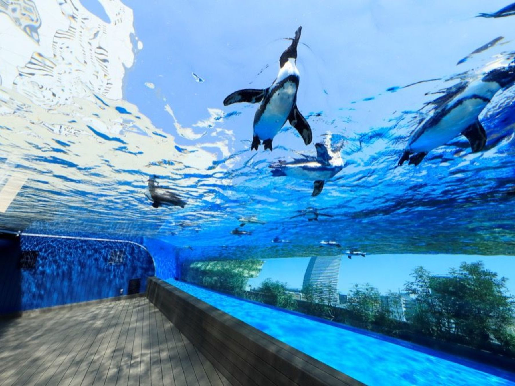 Sunshine Aquarium Ikebukuro Instant E-Tickets - 3