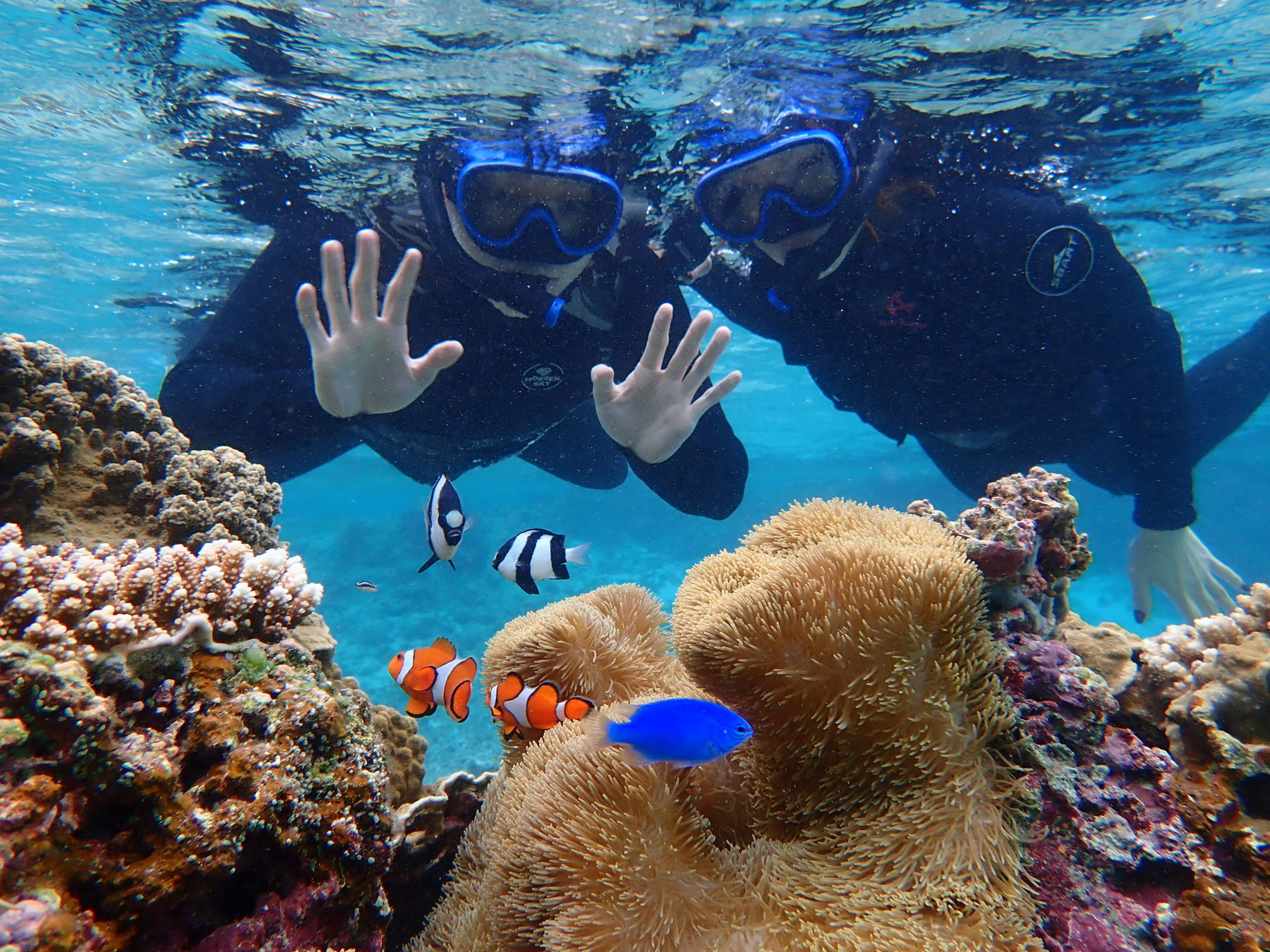 Half-Day or 1-Day Snorkeling with SUP or Canoeing - 4