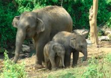 thumbnail_Camp,_trek_and_enjoy_Thailand's_beauty_with_elephants