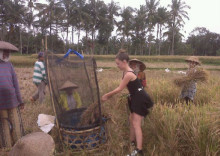 thumbnail_Trek_in_Bali's_Rice_Fields