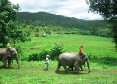 Experience traditional elephant riding with Mahouts