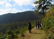 Trek through the Sacred Forests of Meghalaya