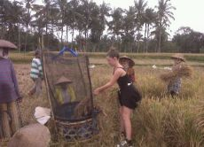 Trek in Bali's Rice Fields