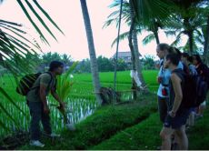 Learn About, Find, and Pick Healing Herbs in Bali