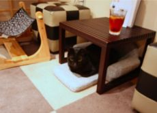 Cat Cafe: A Relaxing Time with Cats