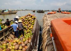 Travel the Mekong Delta by speedboat