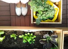 Harvest Vegetables on a Rooftop Farm & Make Healthy Snacks